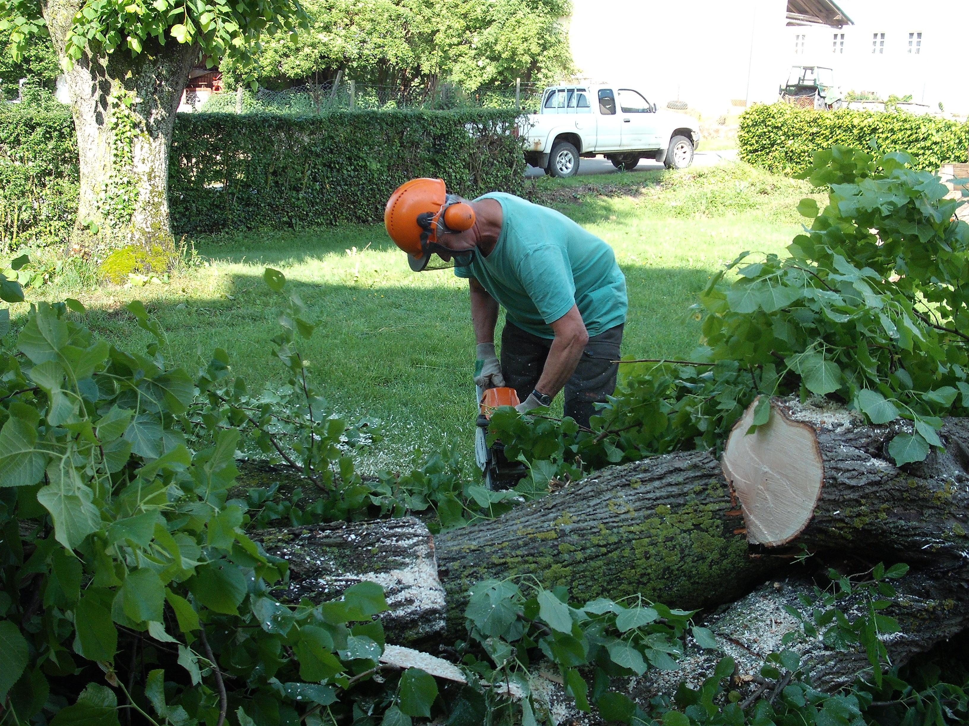 Baumfällarbeit am Gemeindehaus